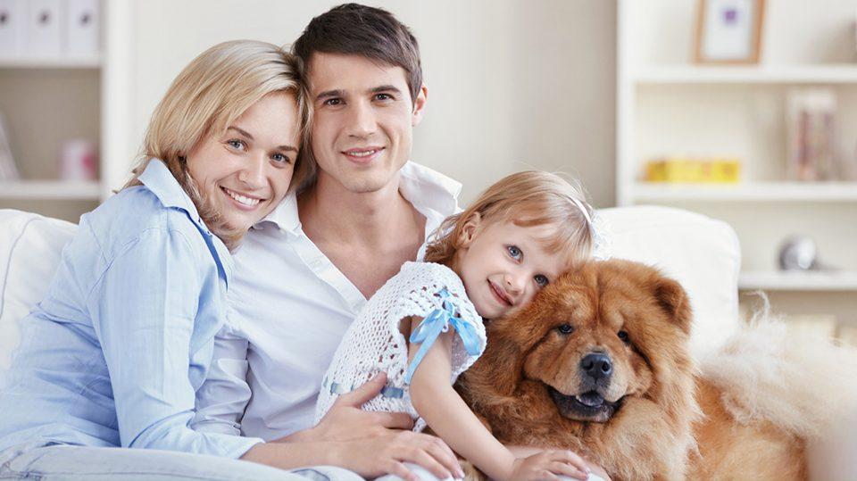 icebau-famiglia-cani