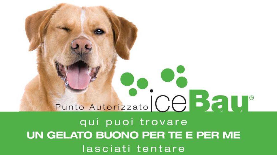 icebau-gelato-cani-latina_3