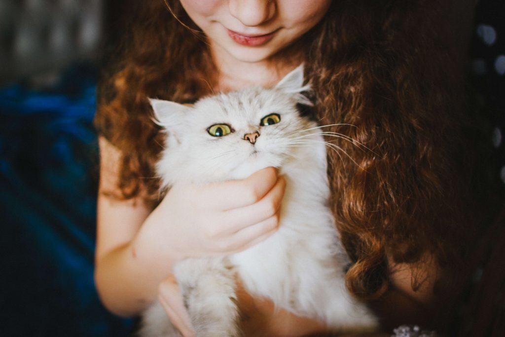 fusa del gatto